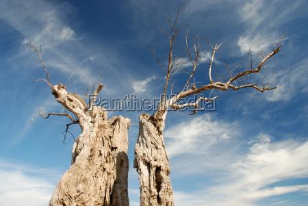 dried tree