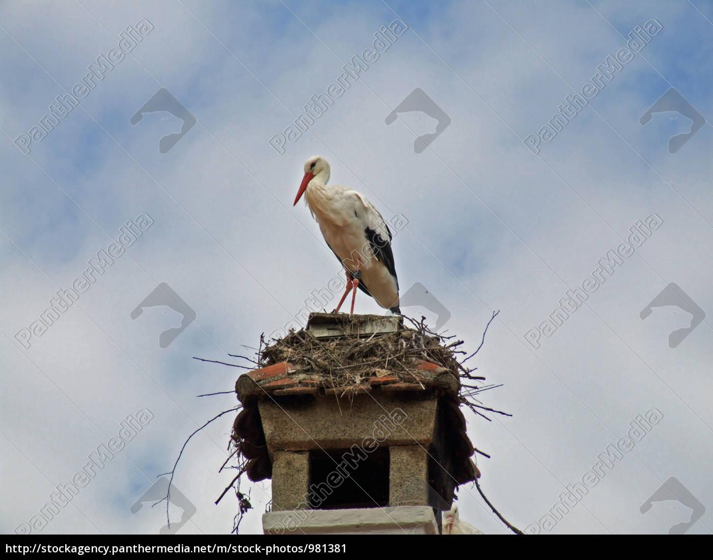 auf, dem, nest - 981381