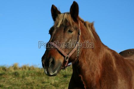 plowhorse
