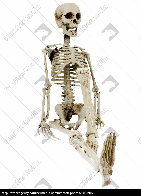 Charmant Menschliches Skelett Unmarkiert Ideen - Menschliche ...