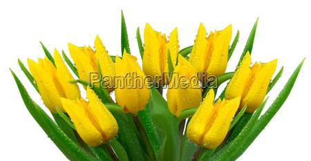 yellow tulip bouquet
