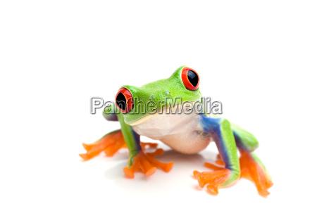 frosch schaut in die kamera