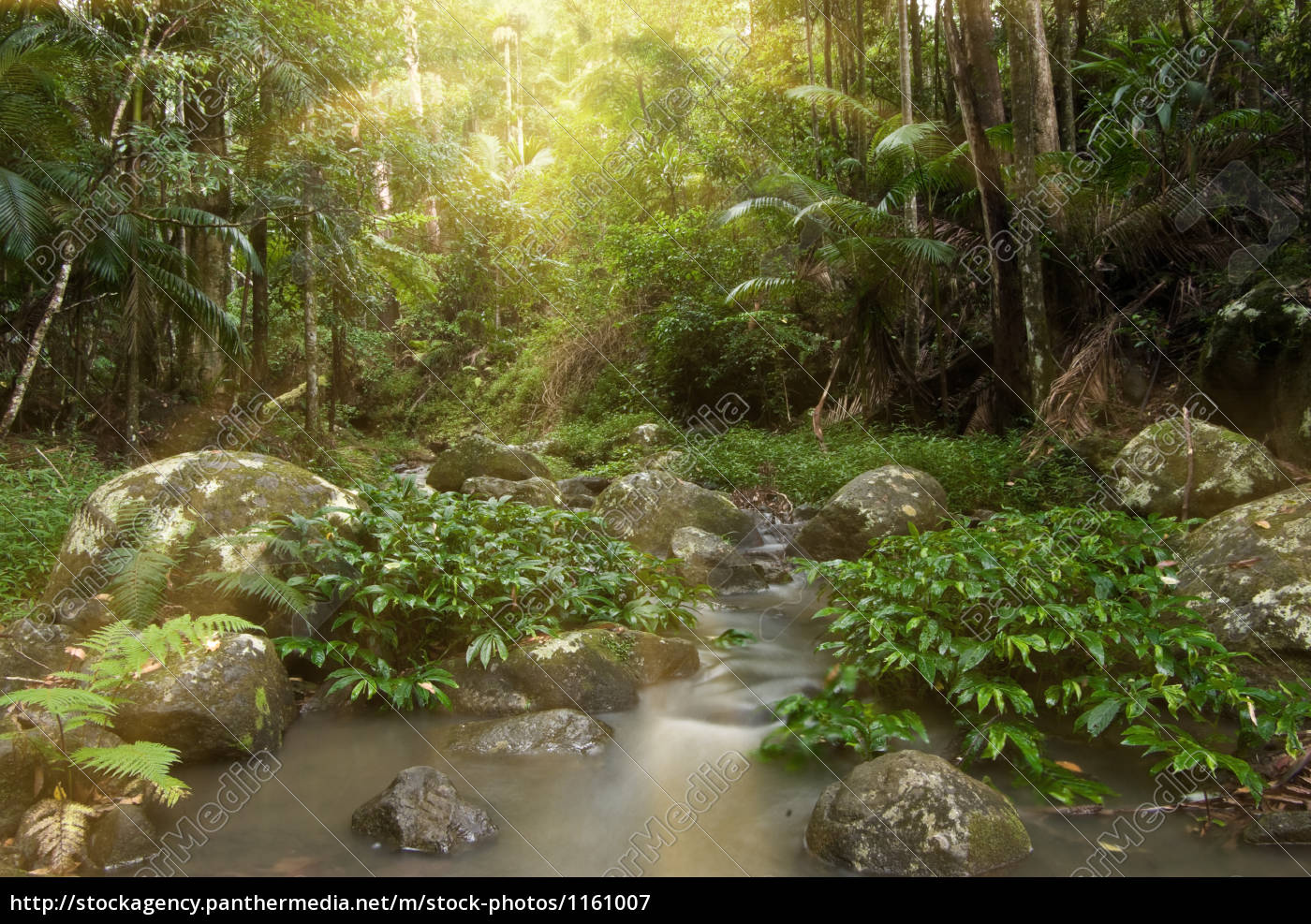 regenwald-strahlen - 1161007