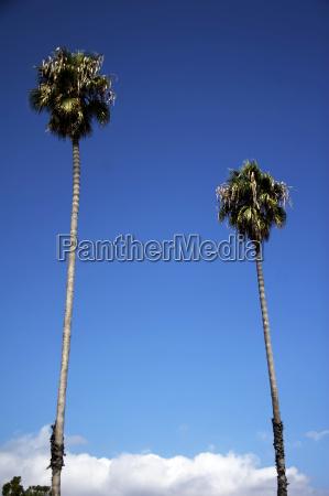 rinde einer palme usa