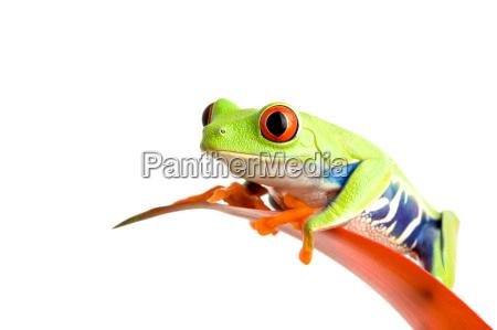 frosch auf guzmania