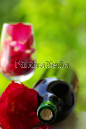 blume rose pflanze wein party feier