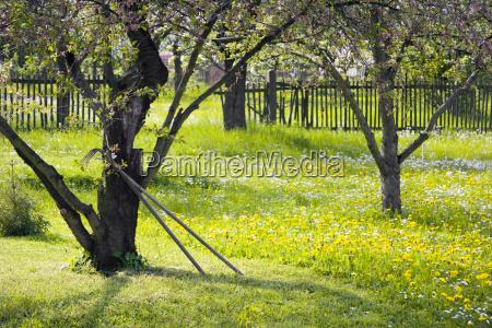 garden world in spring