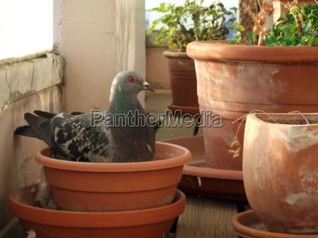 meine neue balkonpflanze