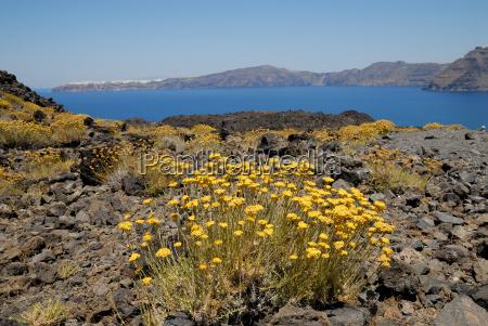 greece flower flowers plant scenery countryside