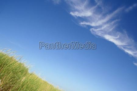 graeser im sommerwind