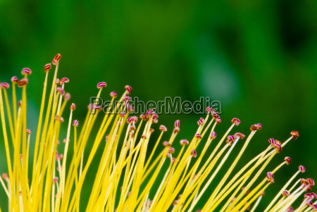 flowwer abstract background