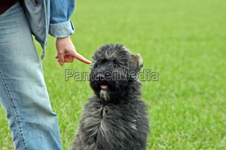 hundeerziehung mit fingerzeig