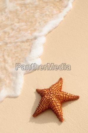 starfish und ocean wave