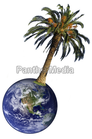 freisteller baum abgeschieden tropische tropisch isolierte