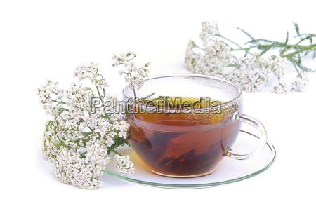 tee schafgarbe tea yarrow 02