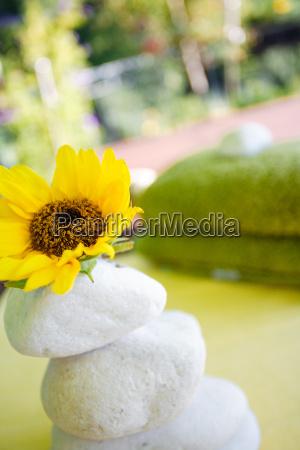 steinstapel mit sonnenblume