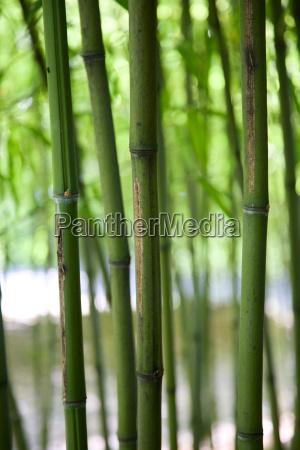 bamboo verticals