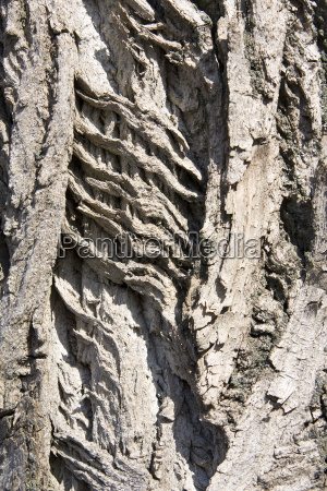 baum holz nutzholz bauholz hintergrund natur