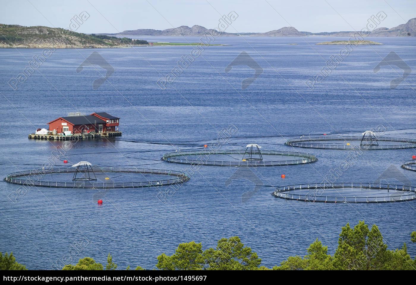 fischfarm netzgehege im fjord norwegen lizenzfreies bild 1495697 bildagentur panthermedia. Black Bedroom Furniture Sets. Home Design Ideas