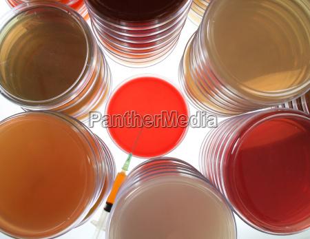 petrischalen fuer die medizinische forschung