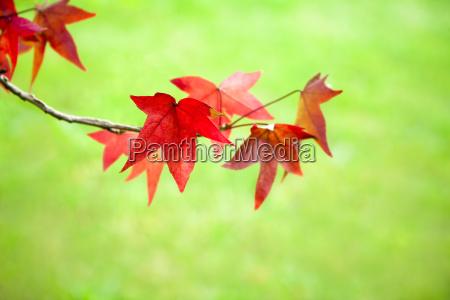 blatt baumblatt baum blaetter im freien
