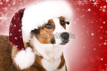 hund mit schneeflocken
