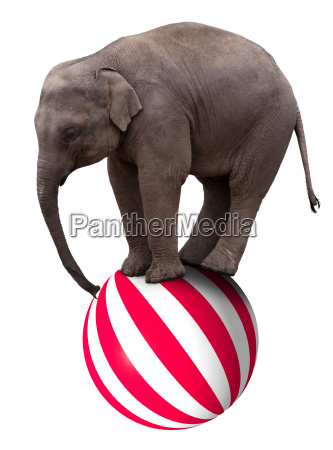 baby elephant am ball