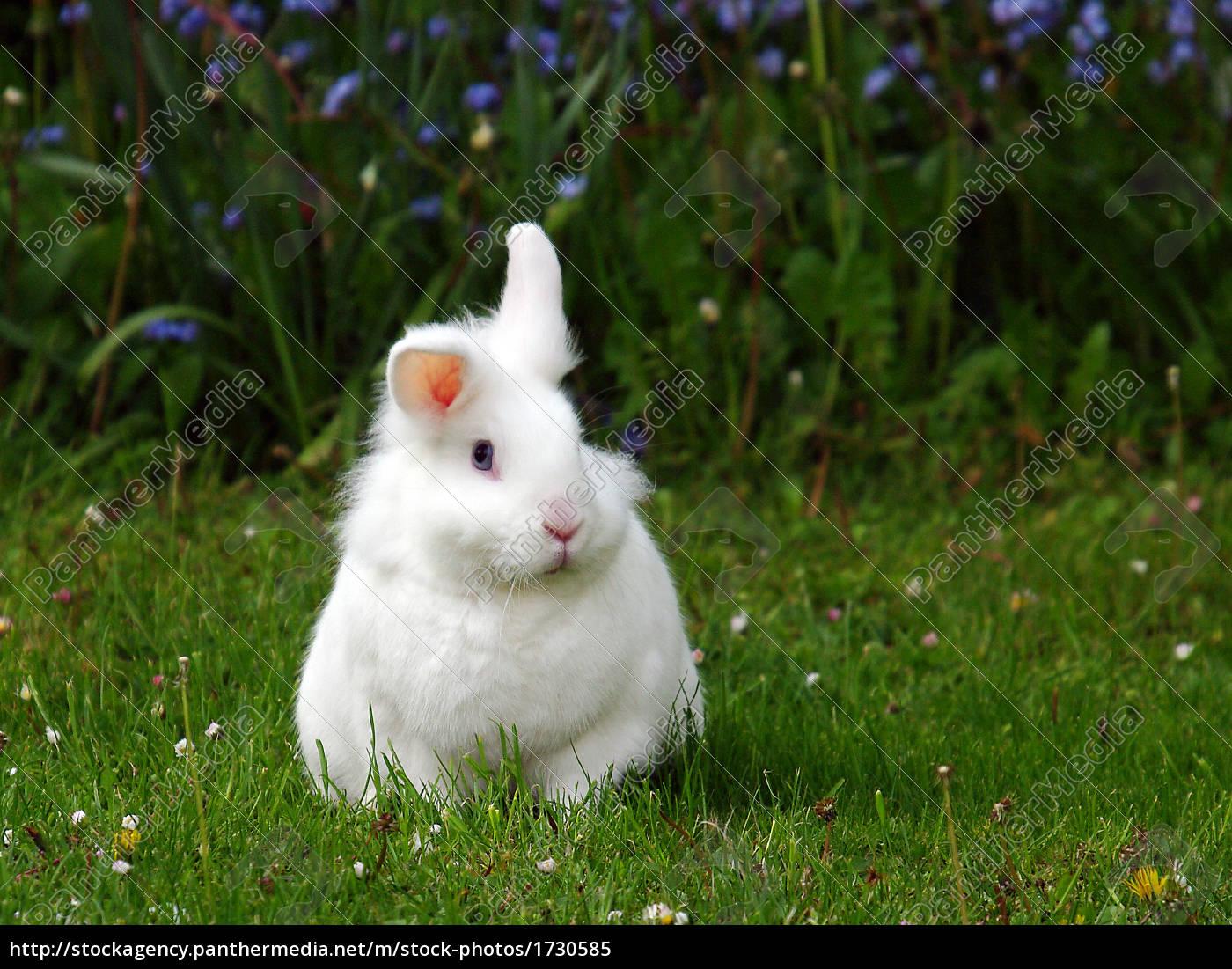 das weiГџe kaninchen