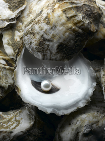 perle in oyster shell