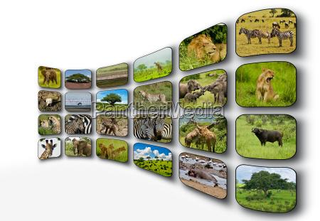 screens animals africa