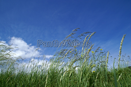 graeser im wind