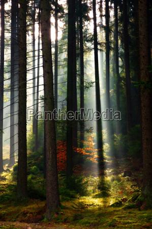 baum baeume nachdenken vegetation spiritus meditieren