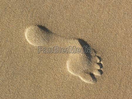 fußspur, im, sand - 1864679