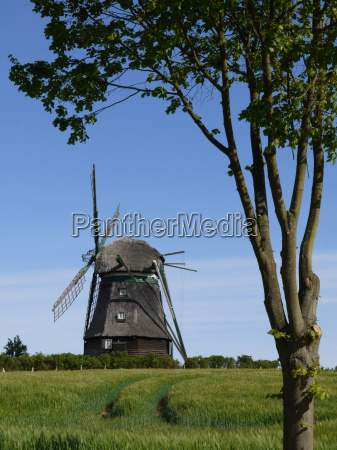 tree field wind force windmill wind