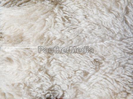 detail tier ausgestopft weich pelz wolle