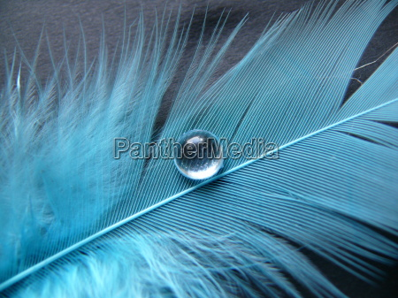 blaue feder mit grossem wassertropfen
