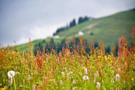 closeup of panoramic flowers and grass