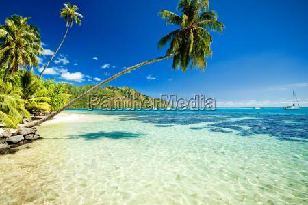 palme haengen ueber atemberaubende lagune