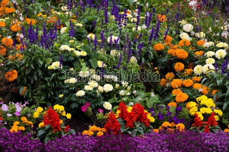 coloured colourful gorgeous multifarious richly coloured