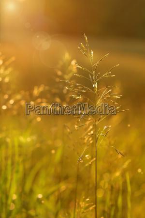 goldener glanz