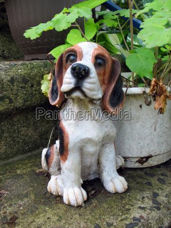 niedliche beagle