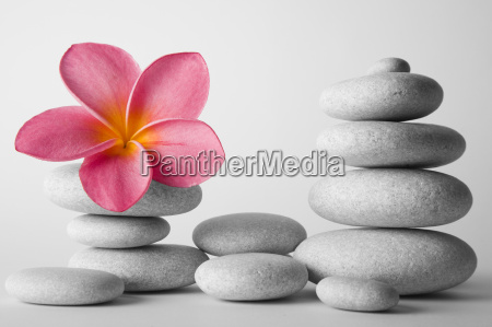 stone stack and frangipani flower