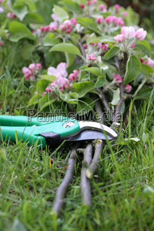 garden shears with branches