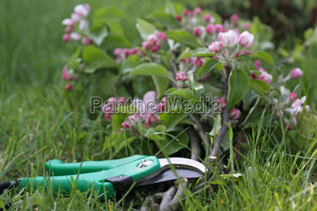 secateurs with branches