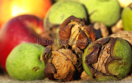 autumn fruits walnuts