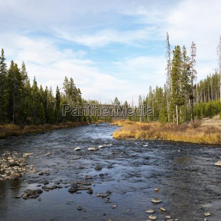 stream im yellowstone park