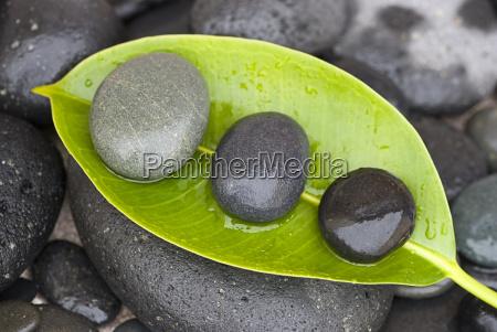 steine auf gruenem blatt
