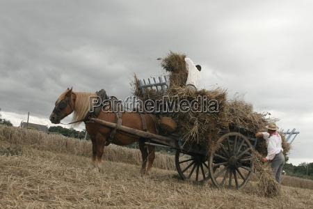 tren vehiculo transporte historico caballo industria