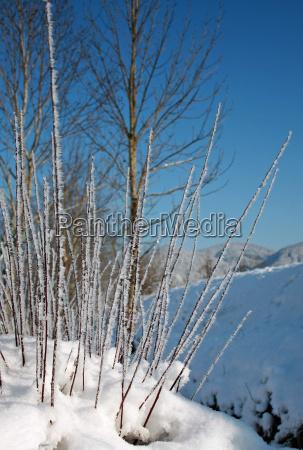 ice crystals snow