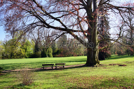 place for relaxation green park in